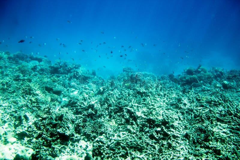 Undervattens- landskap för korallrev i Egypten royaltyfri bild