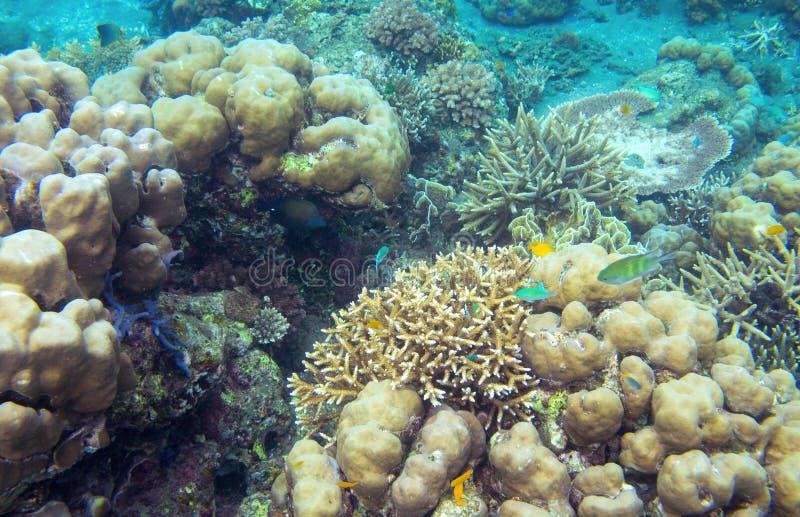 Undervattens- landskap med den tropiska fisken Korallseabottom Exotiskt djurliv för grunt vatten för ö royaltyfria bilder