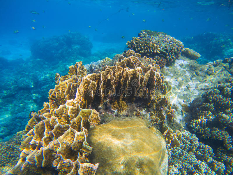 Undervattens- landskap med lättnad för korallrev Tropisk havslagun med olika koraller royaltyfri fotografi