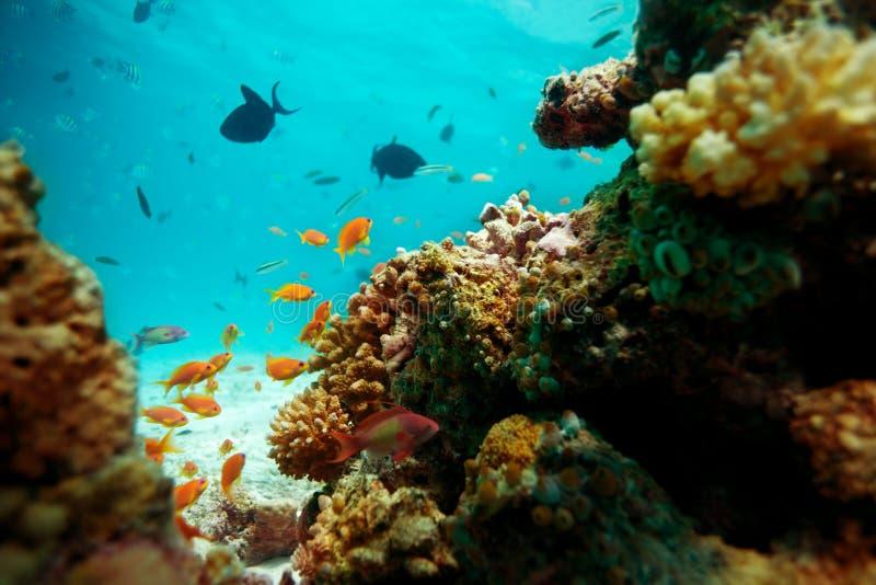 undervattens- livstid arkivfoto