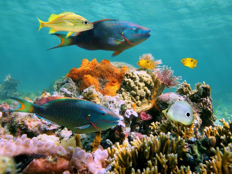 undervattens- mångfärgad sealife royaltyfria bilder