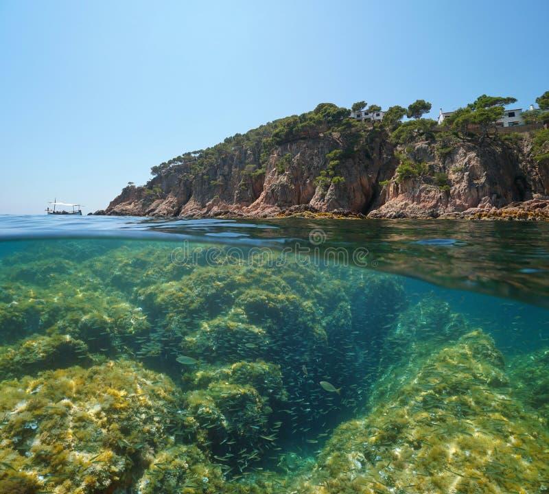 Undervattens- medelhavs- för stenig fisk för kust liten arkivbild