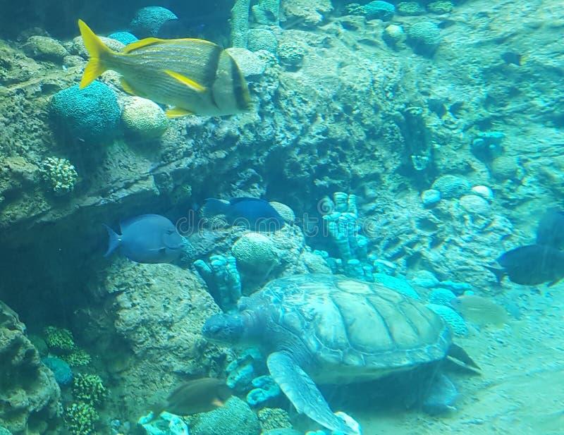 Undervattens- observatorium Marine Park arkivfoton