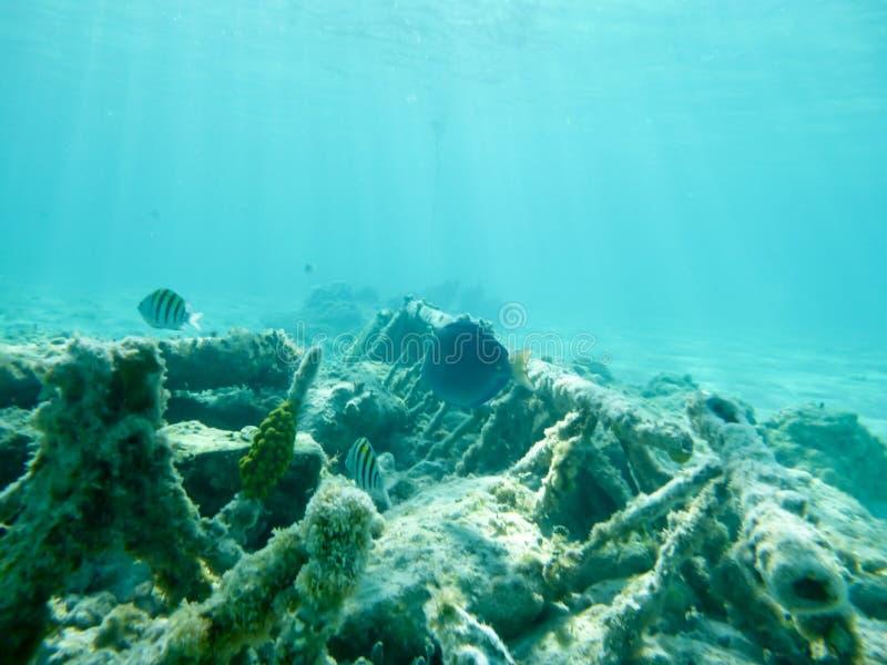 Undervattens- på en privat ö royaltyfria bilder