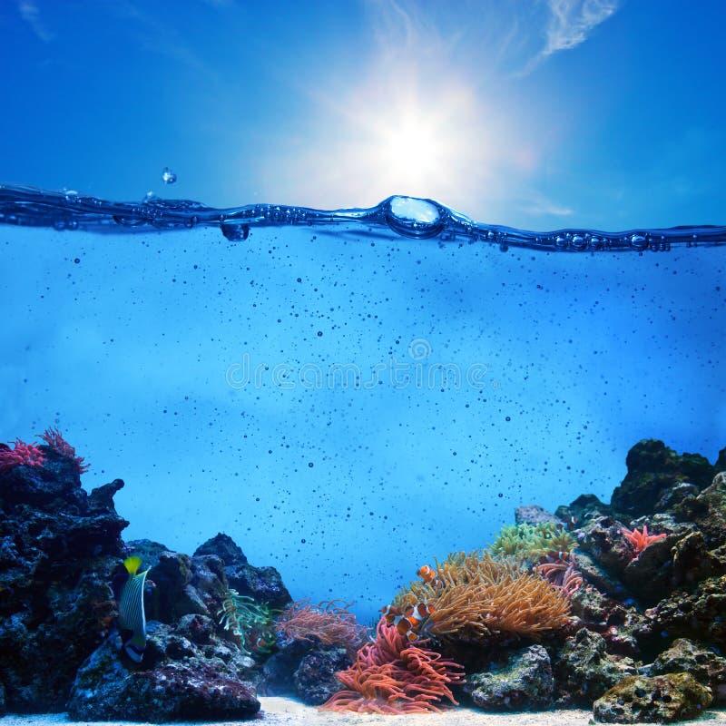 Undervattens- plats. Korallrev, blå himmel royaltyfri foto