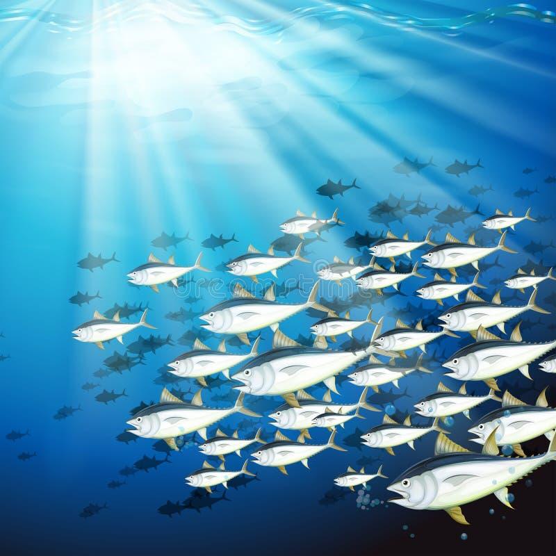 Undervattens- plats med skolan av tonfisk stock illustrationer