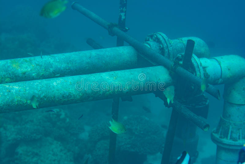 Undervattens- rör i det indiska havet arkivfoton