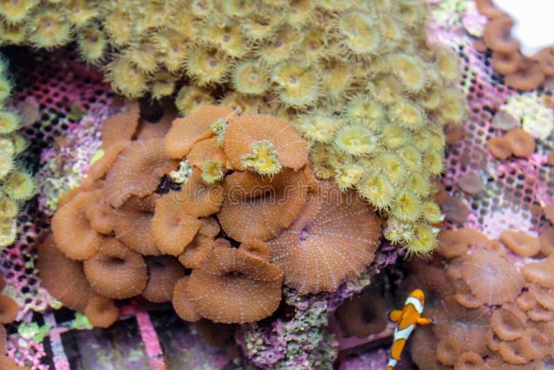 Undervattens- rev och fisk för havs- och havdjurlivkorall fotografering för bildbyråer