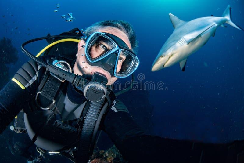 Undervattens- selfie med den gråa hajen som är klar att anfalla arkivfoton