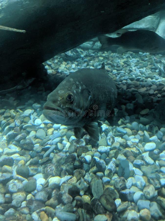 Undervattens- sikt av fisken royaltyfri bild