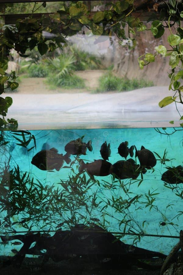 Undervattens- sikt av fisken arkivbild