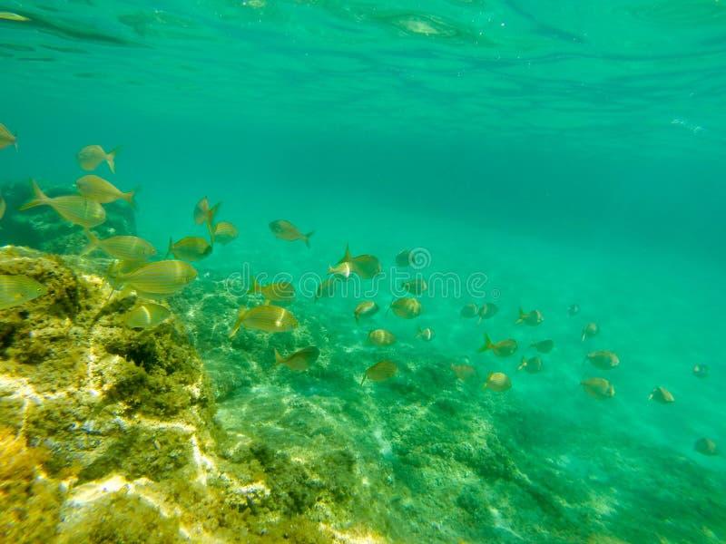 Undervattens- sikt av fiskstimen arkivfoton
