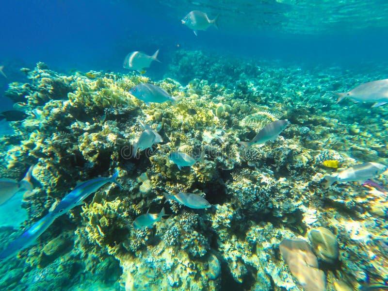 Undervattens- sikt med korallreven och fiskar royaltyfria foton