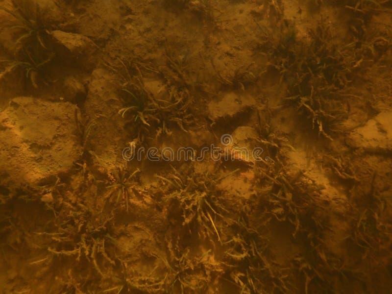 Undervattens- sjö arkivbilder