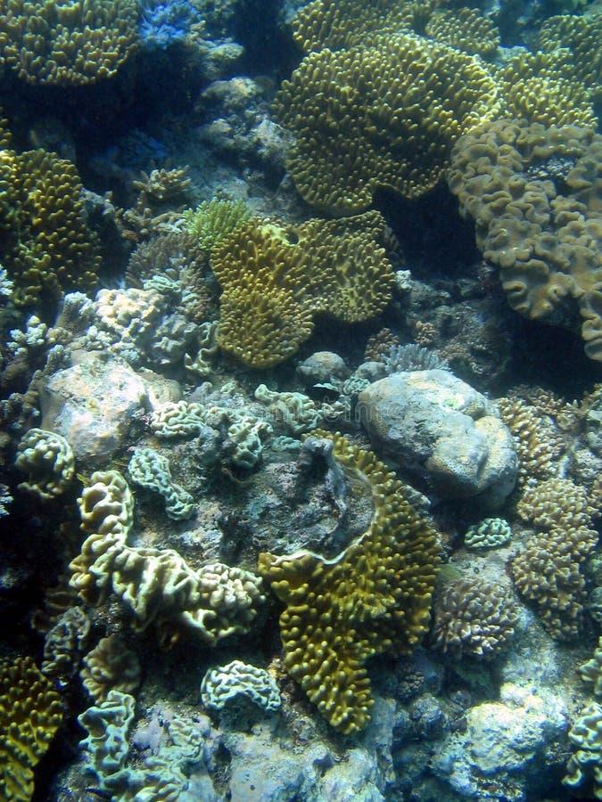 undervattens- stor rev för barriär arkivfoton