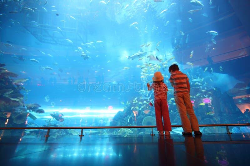 undervattens- tunnel för akvariumpojkeflicka fotografering för bildbyråer