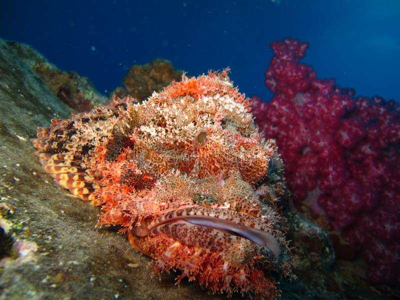 Undervattens- värld i djupt vatten i korallrev och växtblommaflora i marin- djurliv för blå värld, fisk, koraller och havsvarelse arkivbild