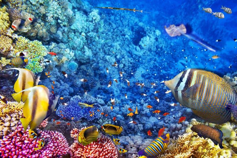 Undervattens- värld med koraller och den tropiska fisken royaltyfri fotografi
