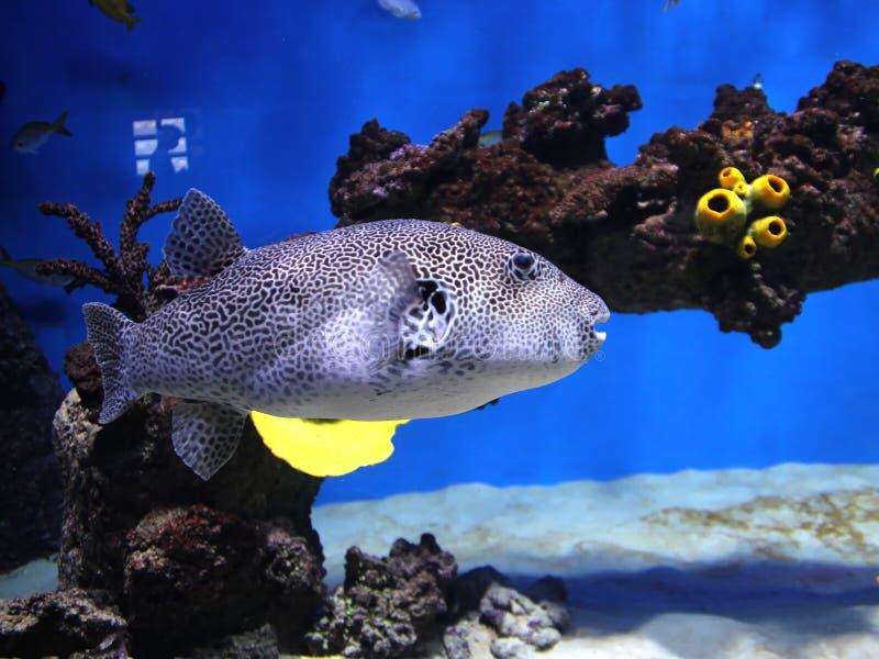 Undervattens- värld Oceanarium i Moskva Moskvarium royaltyfria foton