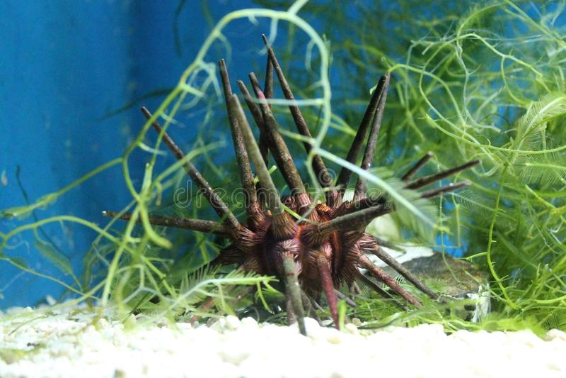 Undervattens- världsakvarium royaltyfria bilder