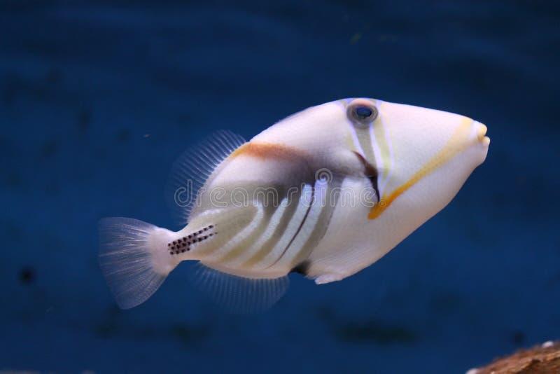 Undervattens- världsakvarium royaltyfri foto