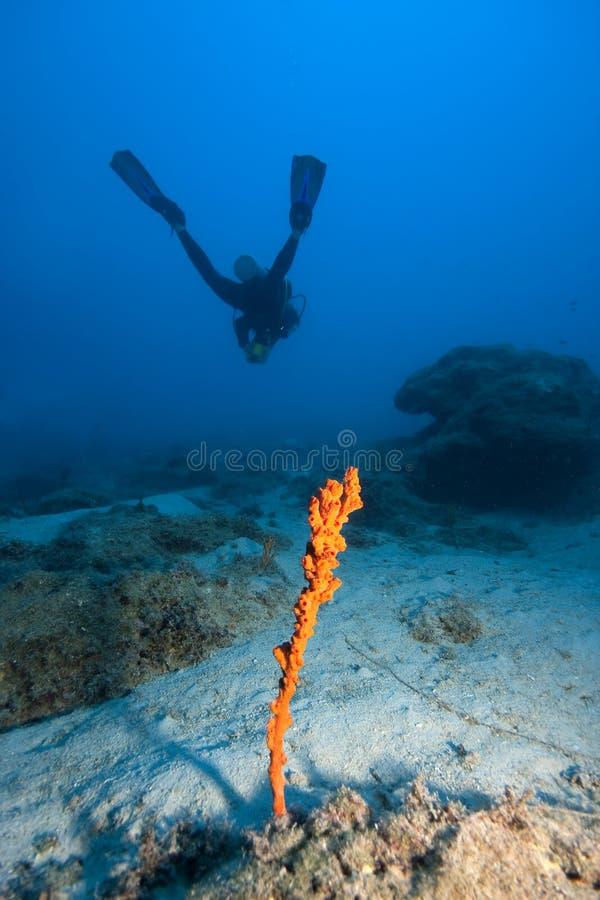 undervattens- vatten för djup dykarescuba royaltyfri foto