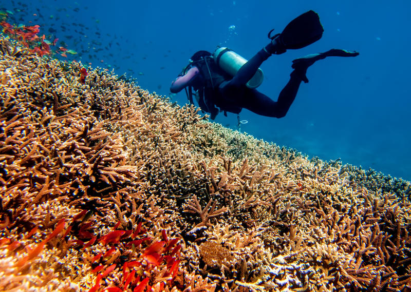 underwater рифа ландшафта рыб коралла тропический стоковые изображения rf