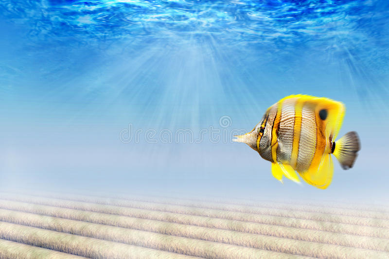 Download Underwater Royalty Free Stock Photos - Image: 10339948