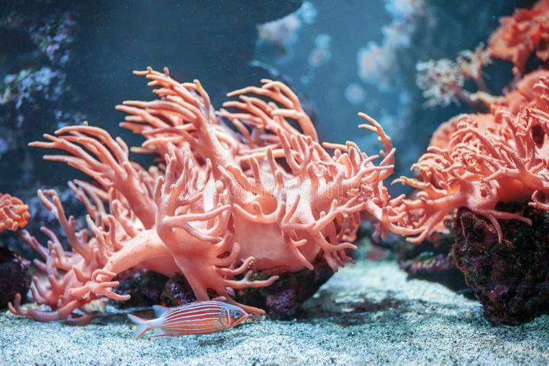 Underwater backround with Living Coral colour. Fish with corals stock photo