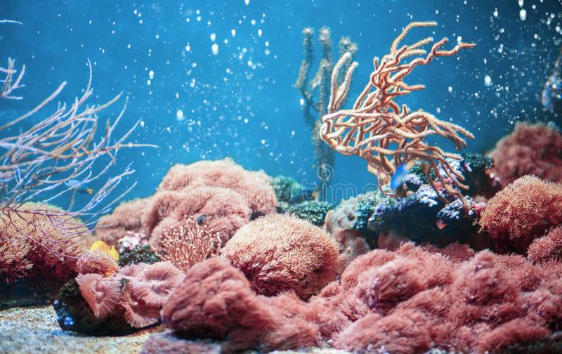 Aquarium life with corals and fishes in trendy Living Coral colour stock image