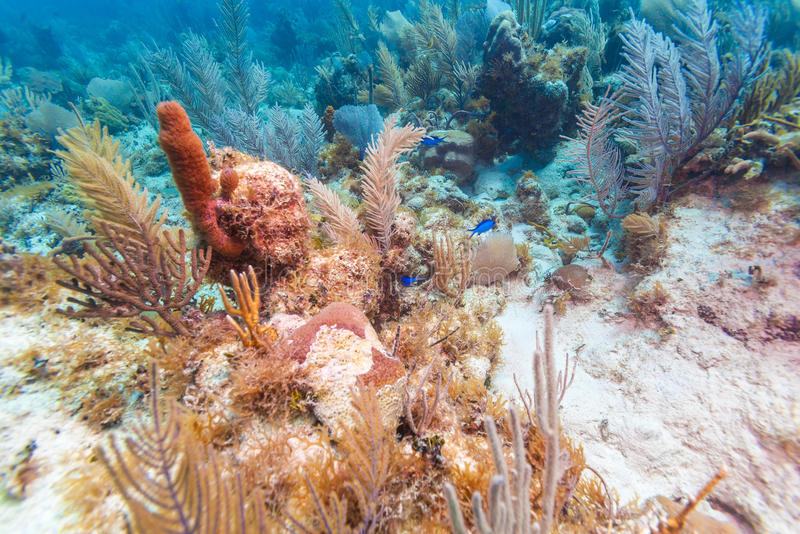 Underwater background with soft and hard corals, Cayo Largo royalty free stock photo