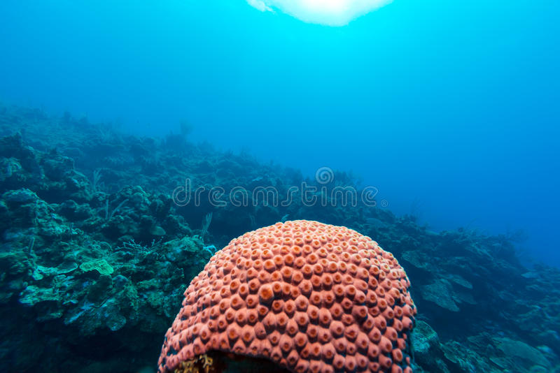Underwater background with soft and hard corals, Cayo Largo stock image