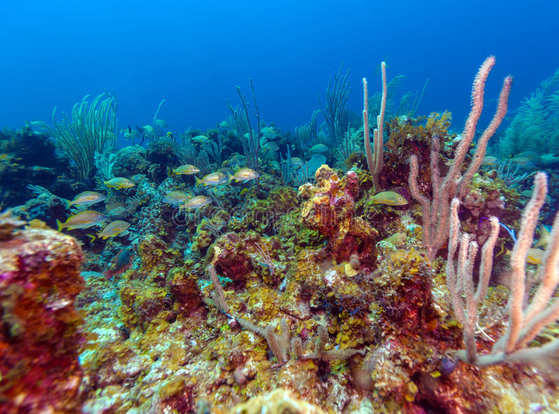 Underwater background with soft and hard corals, Cayo Largo stock photography