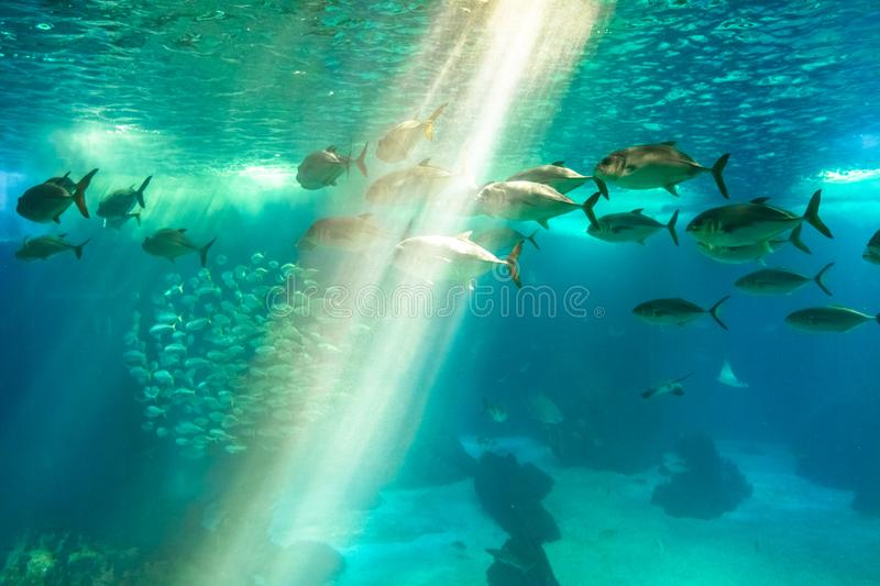 Underwater background with sunbeams royalty free stock photos