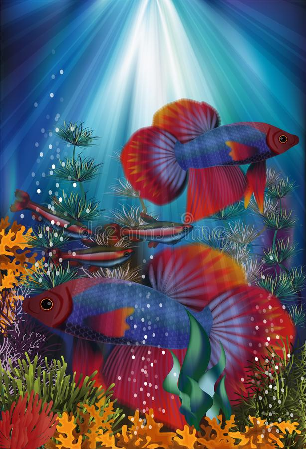 Underwater banner with Betta Splendens and Cardinal Tetra fish, vector i royalty free illustration