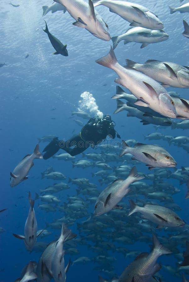 Underwater cameraman filming. stock image