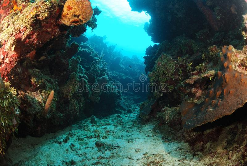 Underwater Canyon In Coral Reef Royalty Free Stock Image ...