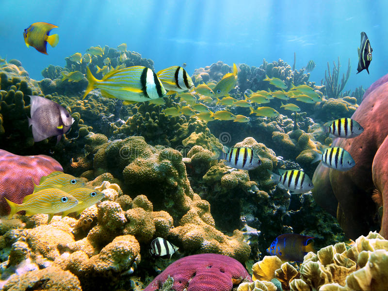 Underwater colors and lights royalty free stock photography