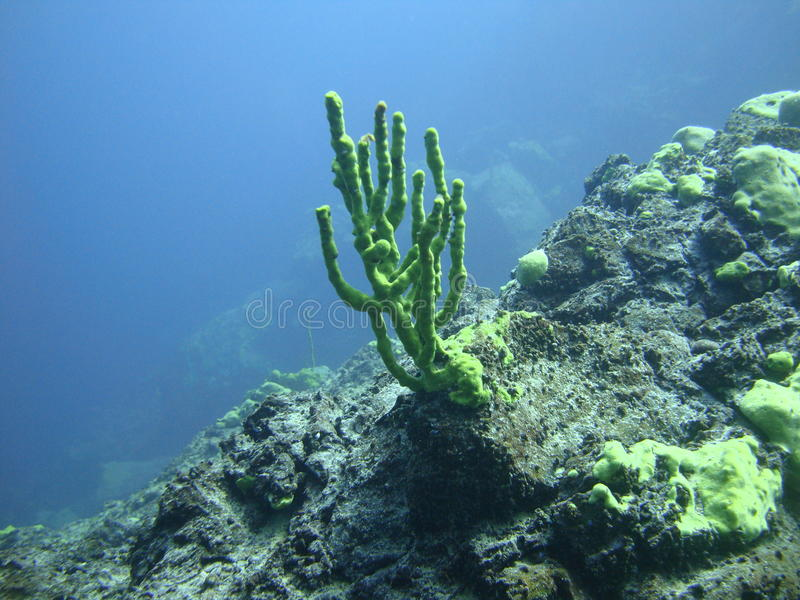 Underwater coral royalty free stock photography