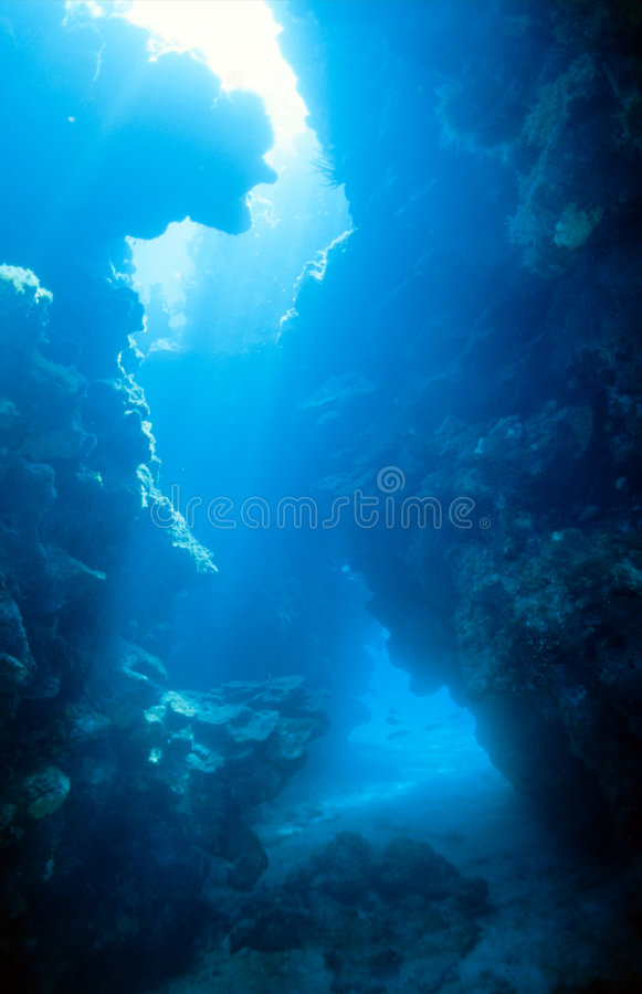 Underwater coral Canyon royalty free stock image