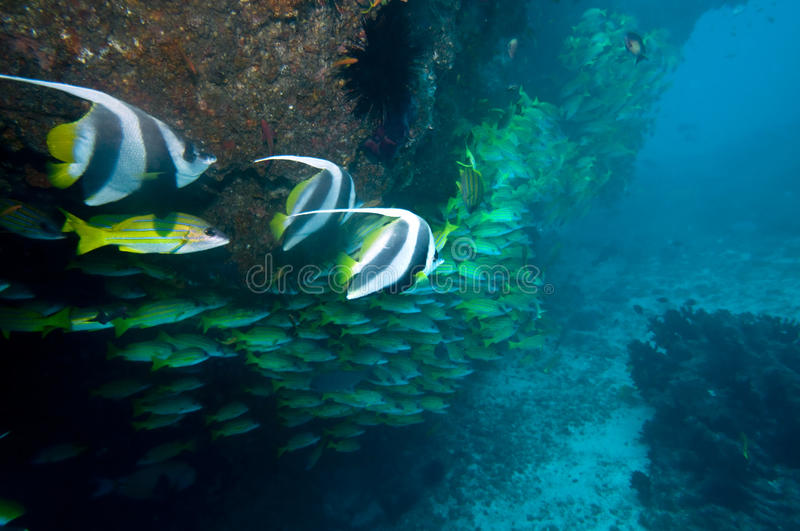 Download Underwater Coral Reef Royalty Free Stock Image - Image: 10091876