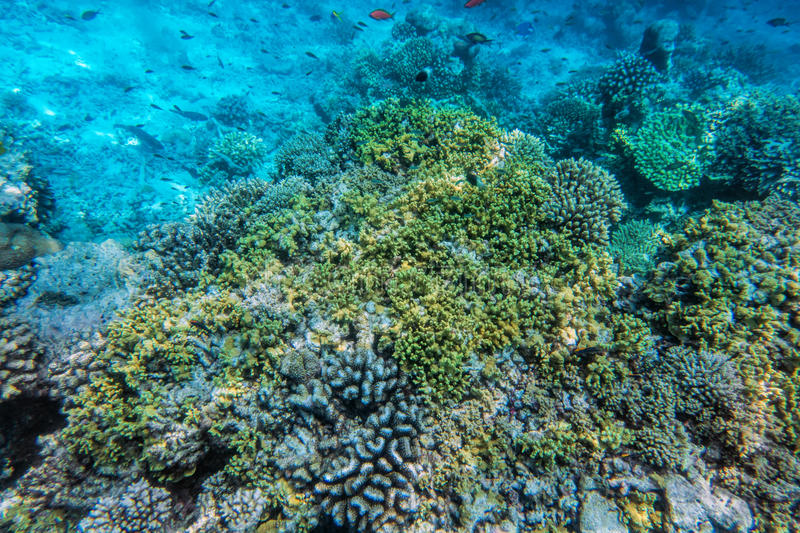 Underwater coral reef and fish in Indian Ocean, Maldives. stock images
