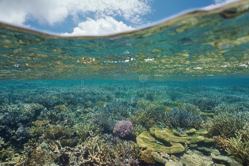 Underwater coral reef Pacific ocean Oceania. Underwater coral reef in good health and blue sky with cloud above water surface, lagoon of Grande Terre island, New stock images