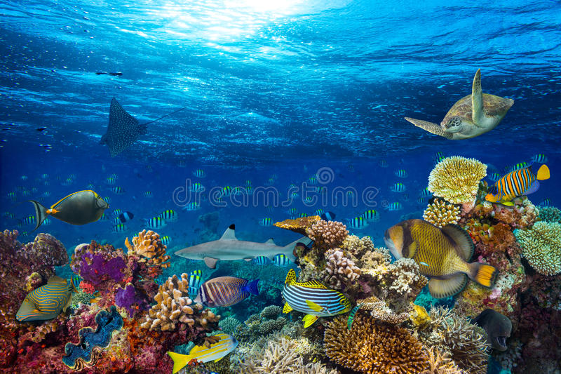 Underwater coral reef landscape stock photo image of for Deep blue fish tanks