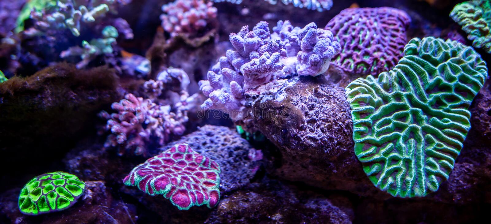 Underwater coral reef landscape background royalty free stock photos