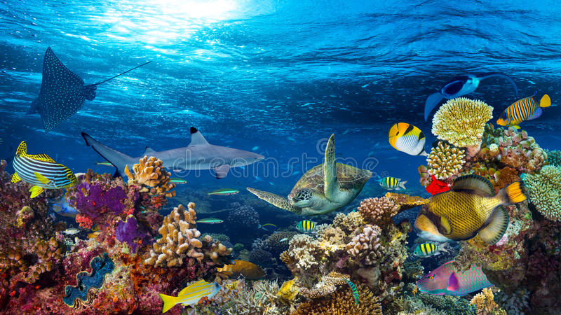 Download Underwater Coral Reef Landscape Stock Image - Image of reef, background: 86150345