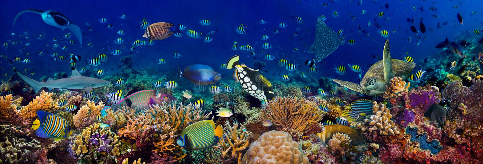 Underwater coral reef landscape wide 3to1 panorama background  in the deep blue ocean with colorful fish sea turtle marine wild stock photos