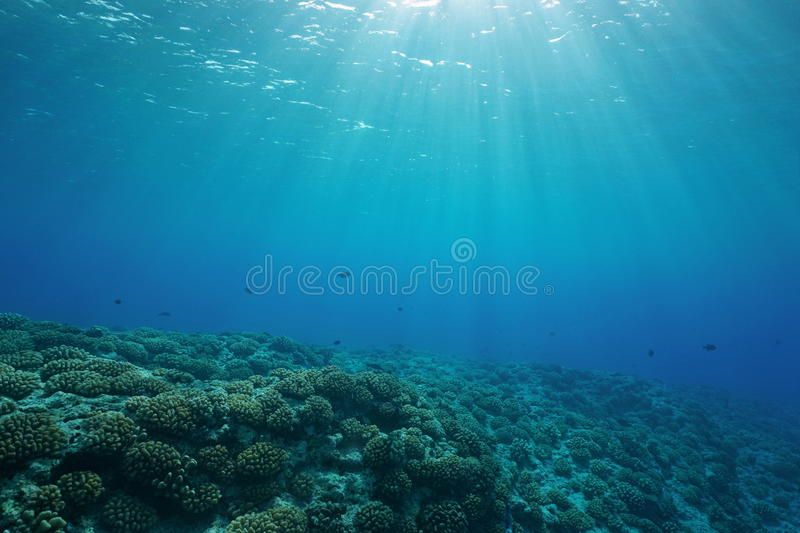 Underwater coral reef ocean floor natural sunlight. Underwater coral reef ocean floor with sunlight through water surface, natural scene, fore reef of Huahine royalty free stock photo