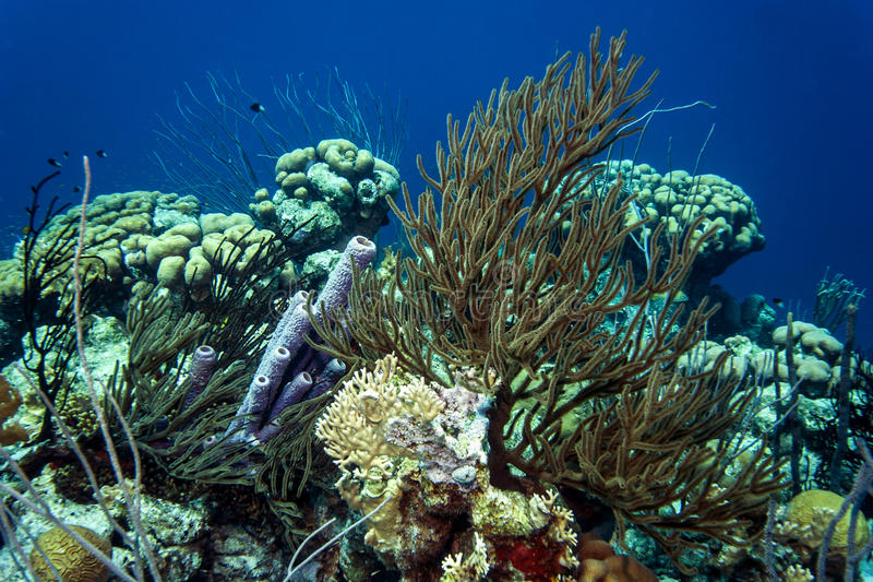 Underwater coral reef. Coral reef off the coast of bonaire stock photos