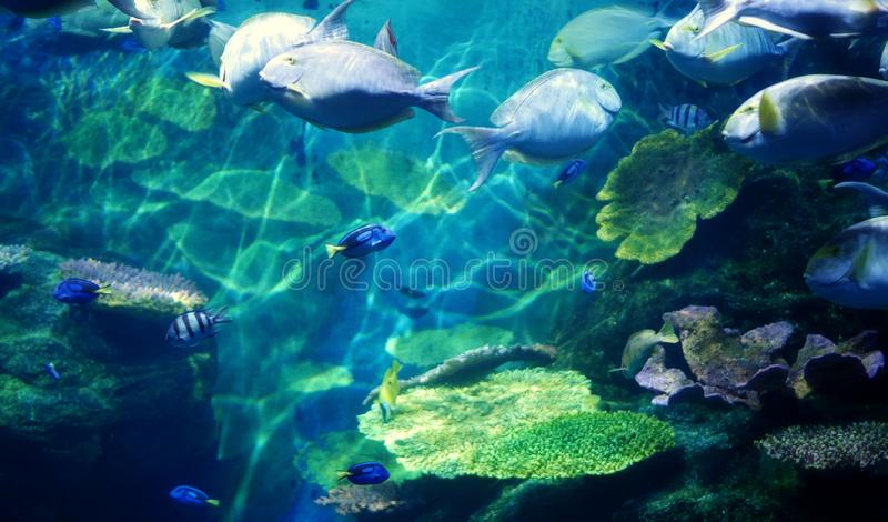 Underwater coral reef sea view stock images